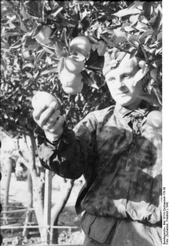 Bild 101III-Zschaeckel-178-38