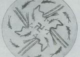 La Svastica, simbolo della vita creativa